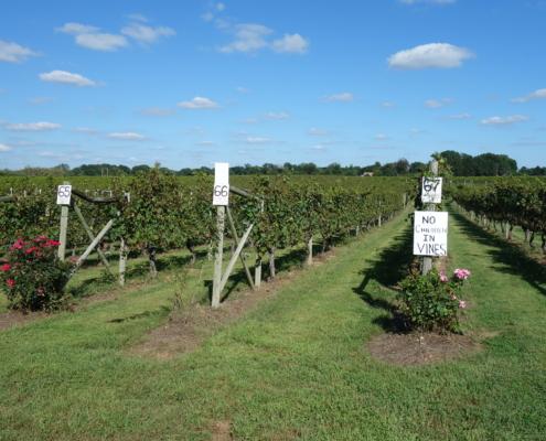 New Jersey Winery