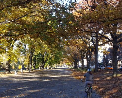 NYC Bike Path