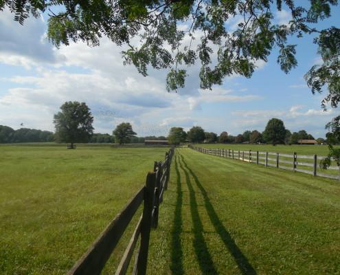 New Jersey horse farm