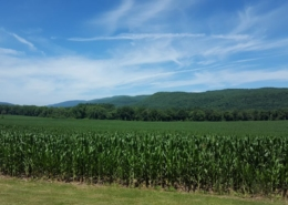 Harlem Valley Rail Ride scenery
