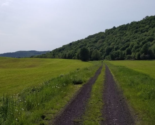 Catskill Scenic Trail field