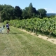 Hudson Valley vineyard